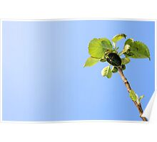 apple, garden, green nature Poster
