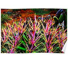 Red Spine Barrel Cactus Top Detail Poster