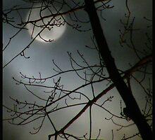 Winter moon by Irene67