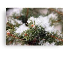 Snowy Pine Details Canvas Print