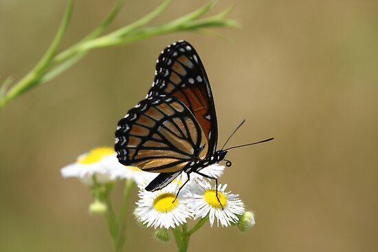 Butterfly and Blooms.. by Gregg Williams