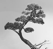 The Bonsai in Black and White by mallorybottesch