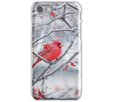 Red Cardinal Red Berries iPhone Case/Skin