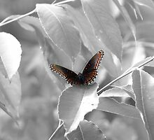 Butterflies Are Free To Fly - Selective Coloring Series by Joe Thill