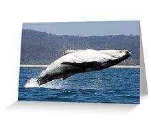 Humpback Whale breach Greeting Card