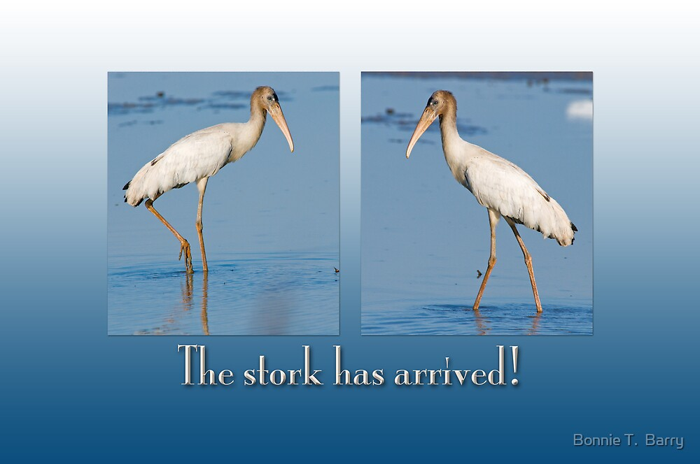 The Stork has arrived! by Bonnie T.  Barry