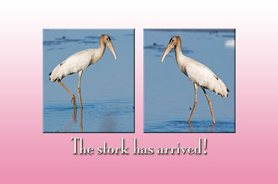 The Stork has arrived! (Pink version) by Bonnie T.  Barry