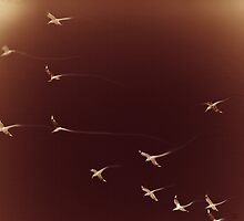 elastic birds by danielito