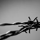 Barbed wire by Gabriel Martinez