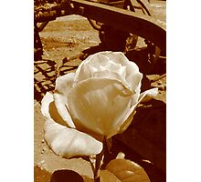 Faded glory  Photographic Print