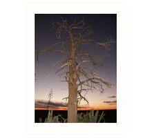 Ivanhoe Tree #410 Art Print