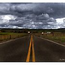 Country Road by Nikki Collier