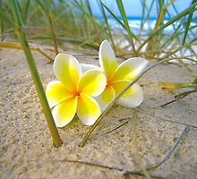 Frangipani Beach. by Raphaela  Sampaio