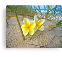 Frangipani Beach. Canvas Print