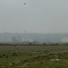Cropland In The Fog...With Blackbirds by WildestArt