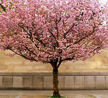 spring by Kara Maddox