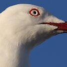 Seagull Stare by Martin Hampson