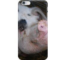 Gloucester Old Spot Pig iPhone Case/Skin