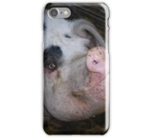 Gloucester Old Spot Pig iPhone Case/Skin