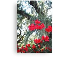 Azaleas and Spanish Moss Canvas Print