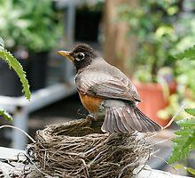 Protecting the Nest by Sheryl Kasper