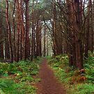 Magical Scottish forest  by ljm000