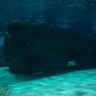 Under the Sea by randi1972