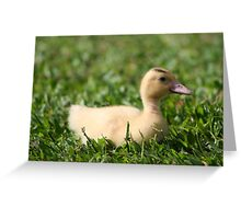 Lucky Duck Greeting Card