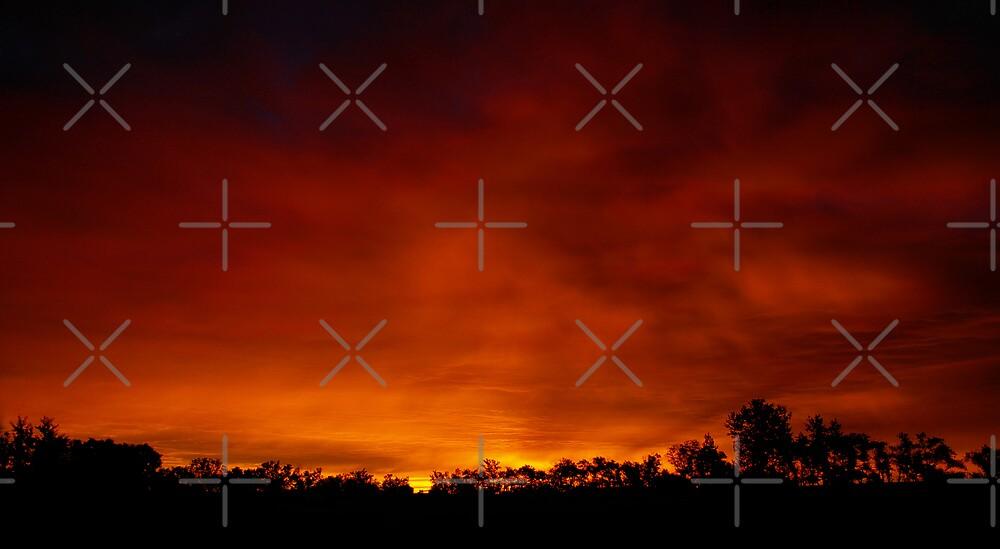 Prairie Morning Sky by Tina Renaud