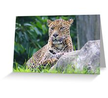 The Sri Lanka leopard.... Greeting Card