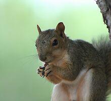 My Nut by Tom Broderick IPA