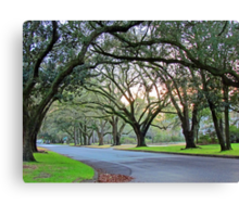 Tree Lined Street In Wilmington, NC Canvas Print