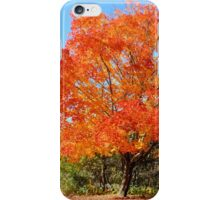 Orange Tree Autumn Landscape and Pathway iPhone Case/Skin