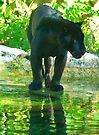Black Jaguar by dc witmer