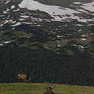 Elk Mountain high by Daniel Doyle