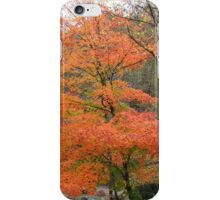 A Tree In Autumn iPhone Case/Skin
