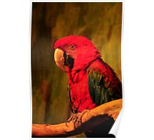 Striking Red Macaw Poster