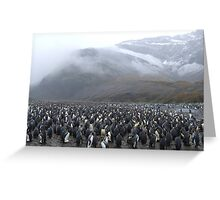 King Penguin Rookery Greeting Card