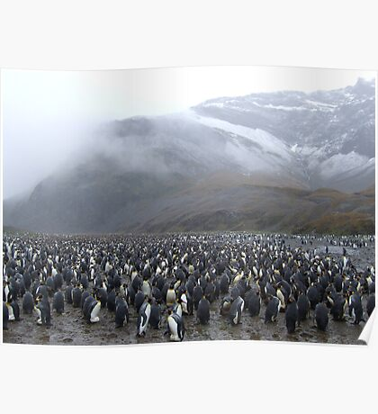 King Penguin Rookery Poster
