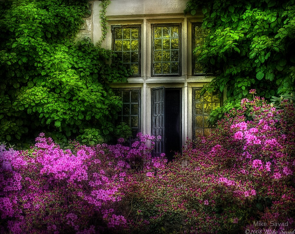 A window by Mike  Savad