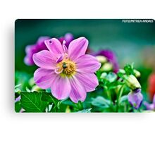 Purple bee Canvas Print