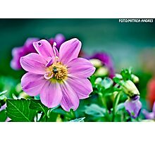 Purple bee Photographic Print