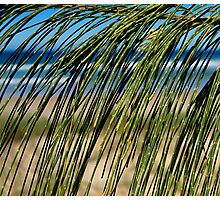 Beach Screen Photographic Print