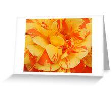 striped rose Greeting Card