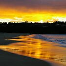 Golden morning by Alison Howson