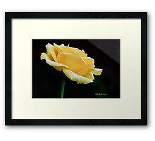 Yellow Rain Catcher Framed Print