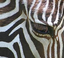 Abstract of zebra........ by jdmphotography