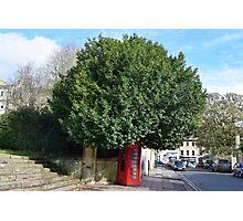 Telephone Tree Photographic Print
