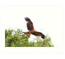 Red Kite......... Art Print