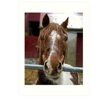 Wet Horse Art Print